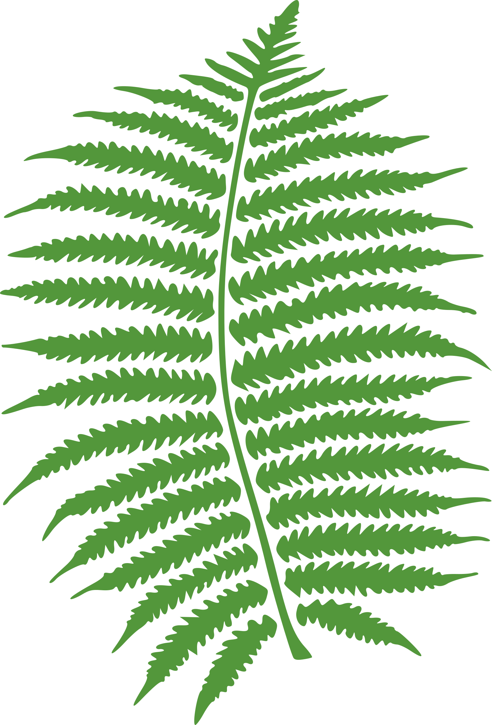 png transparent stock . Fern clipart.