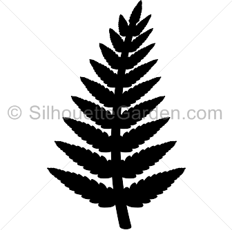 clip royalty free download Fern clipart. Silhouette clip art download