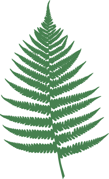 png free stock Fern Leaf Silhouette at GetDrawings