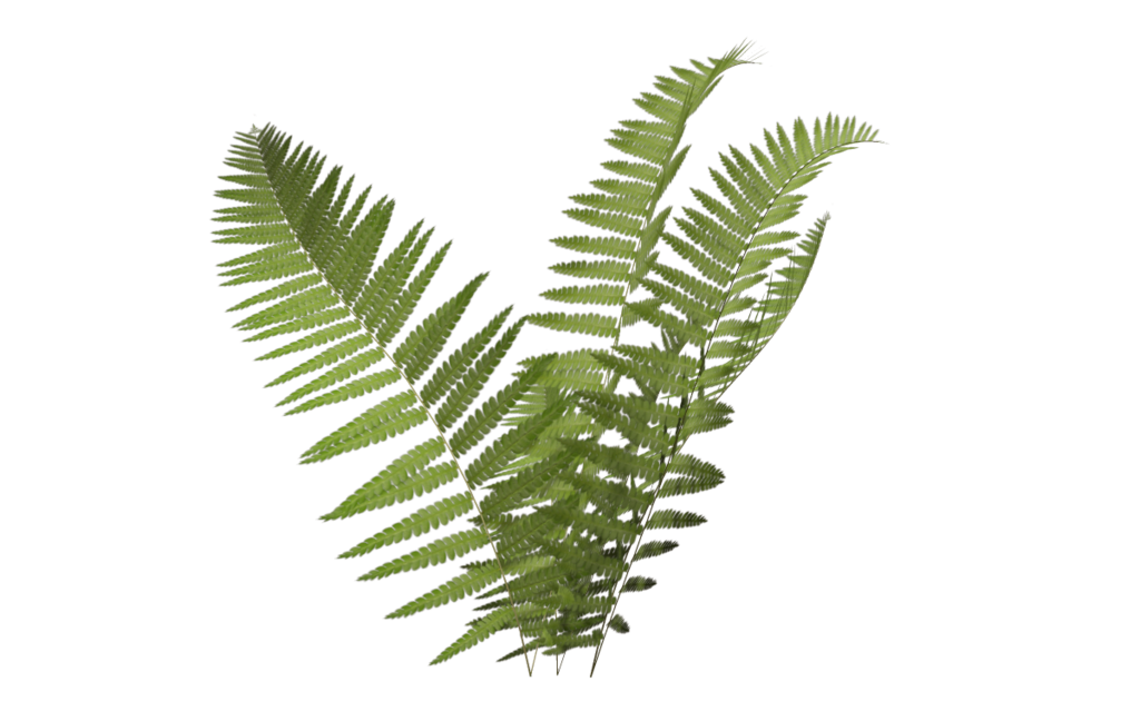 svg royalty free fern clipart planter #35224991