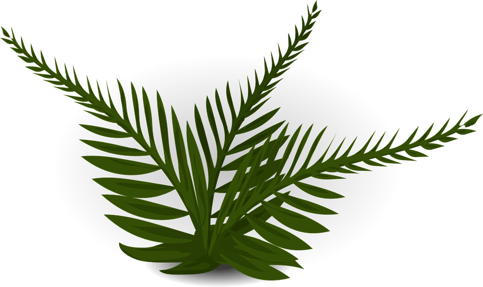 banner black and white stock Free on dumielauxepices net. Fern clipart prehistoric plant