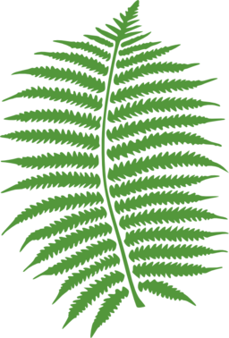 jpg black and white library Fern clipart prehistoric plant. Medal free on dumielauxepices