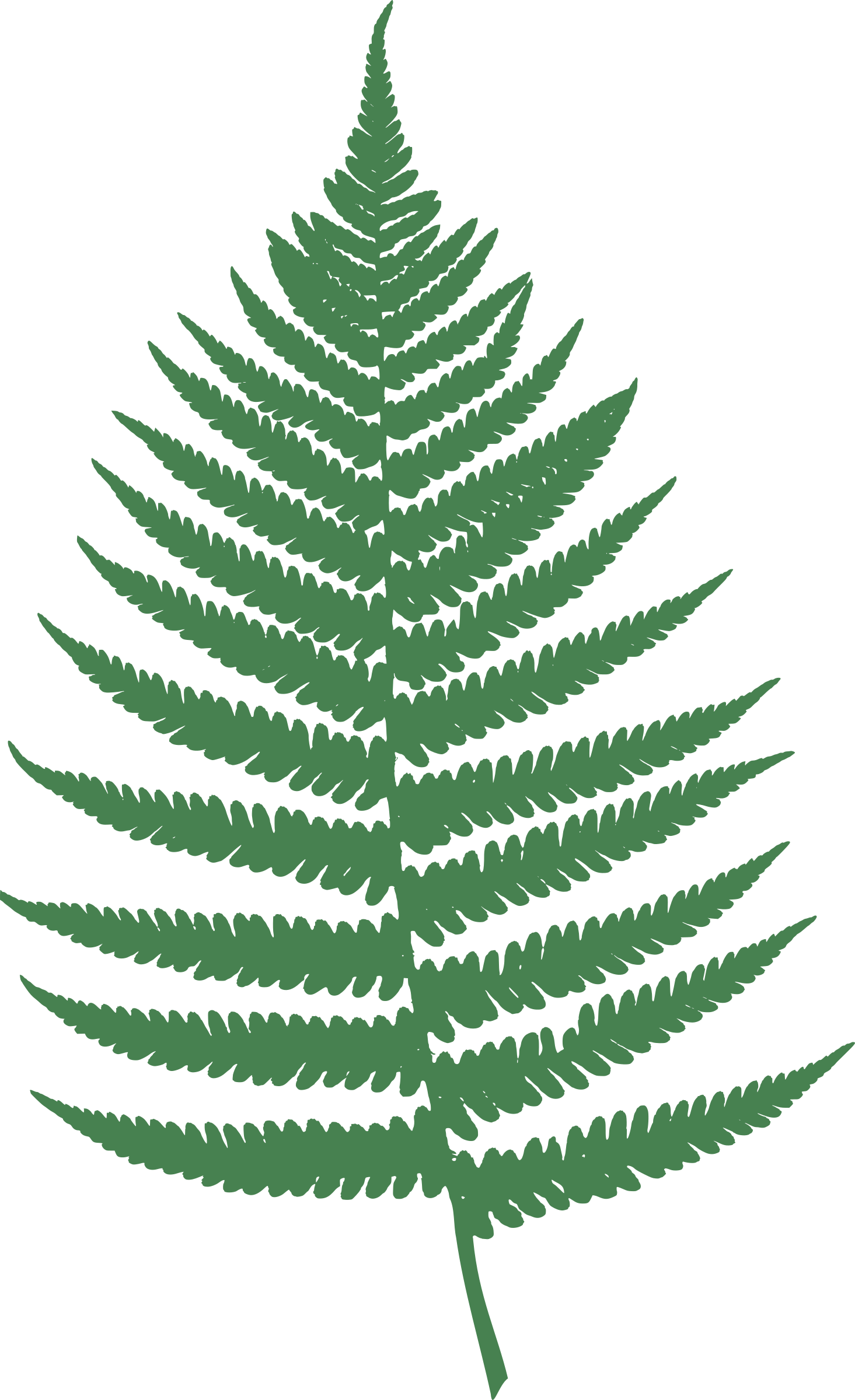 vector transparent Leaf big image png. Fern clipart.