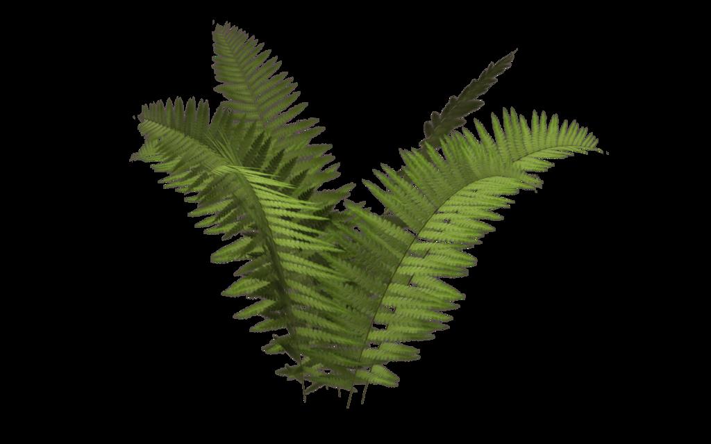 jpg freeuse download fern transparent background #112801995