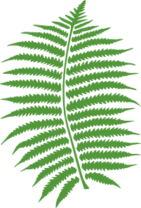 clip art black and white library Fern Clip Art at Clker