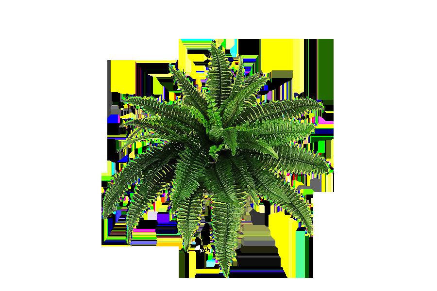 clip art free stock fern transparent jungle #112803280
