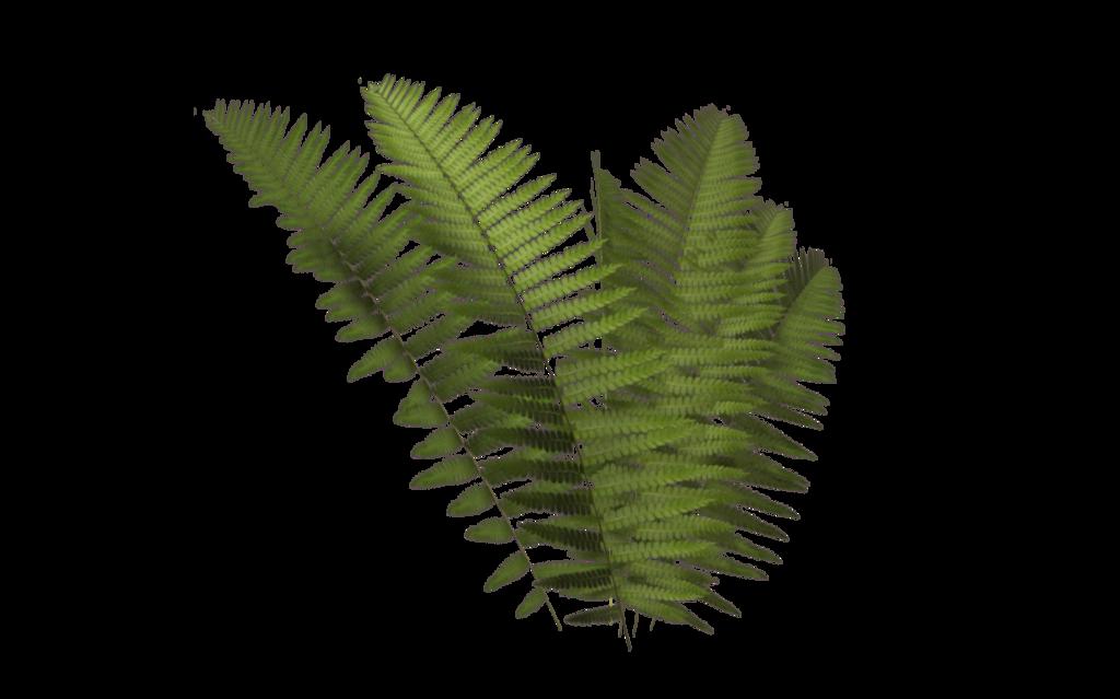 svg stock fern transparent leaves #112803058