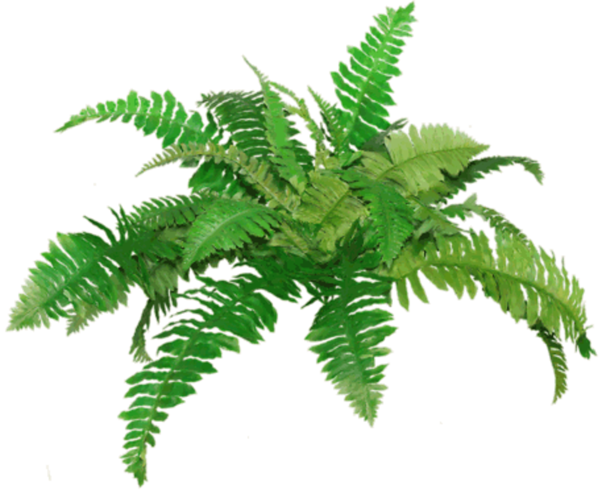 png free stock Fern Png