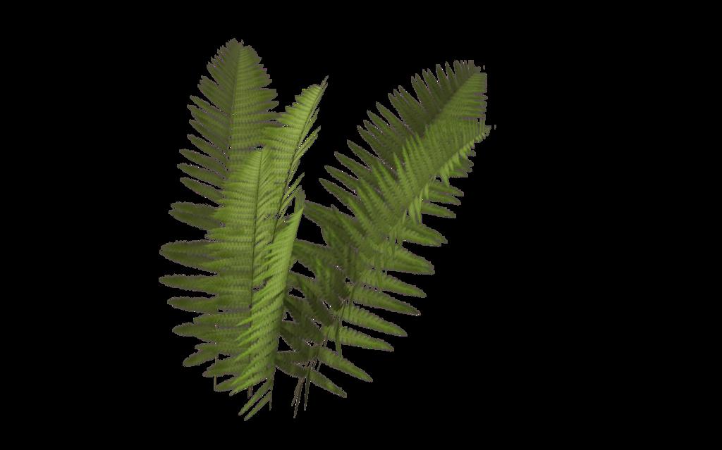 svg freeuse download Fern Plant Leaf Rendering