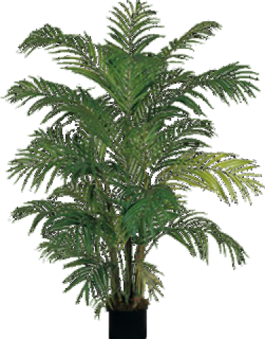 banner royalty free download Fern potted clipart