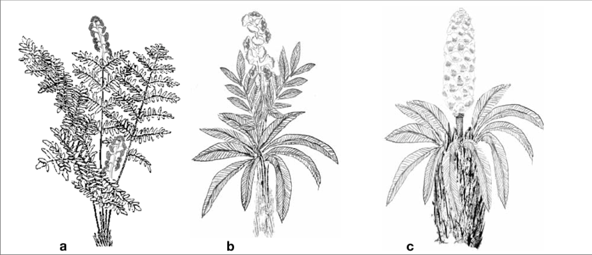 graphic royalty free library fern transparent triassic #112803191