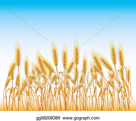picture royalty free stock Field of wheat clipart. Eps illustration vector gg