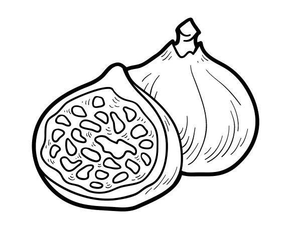 png stock Fig drawing. Coloring book common food