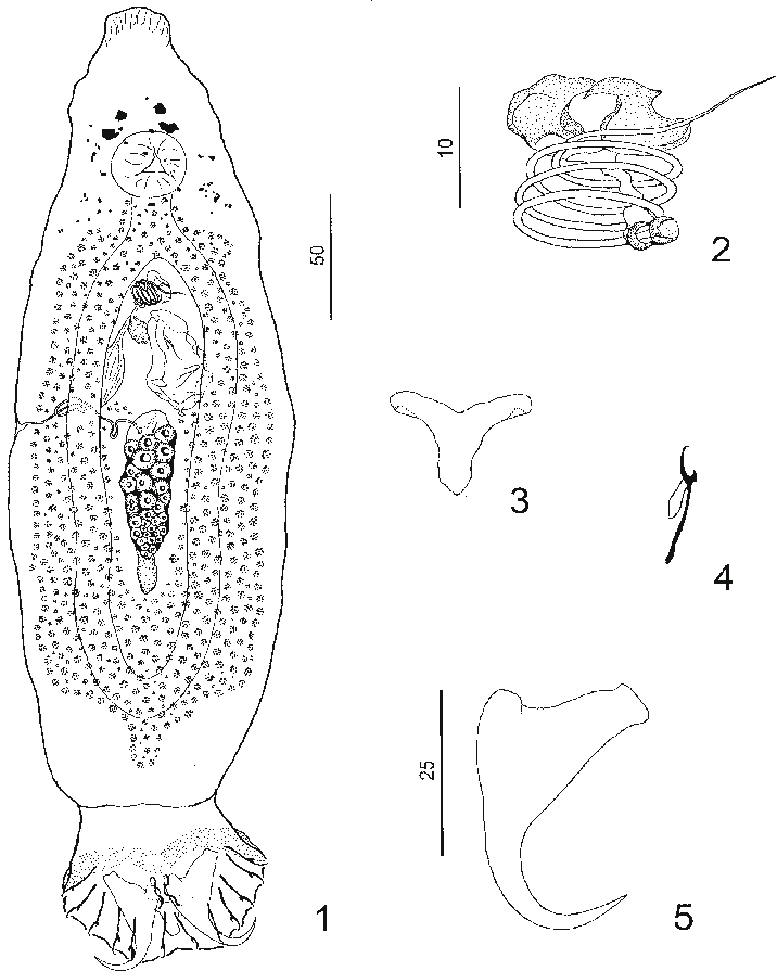 png freeuse stock Composite dorsal view whole. Fig drawing