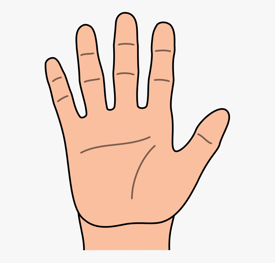 clipart library Fingers clipart. Of represent hand and.