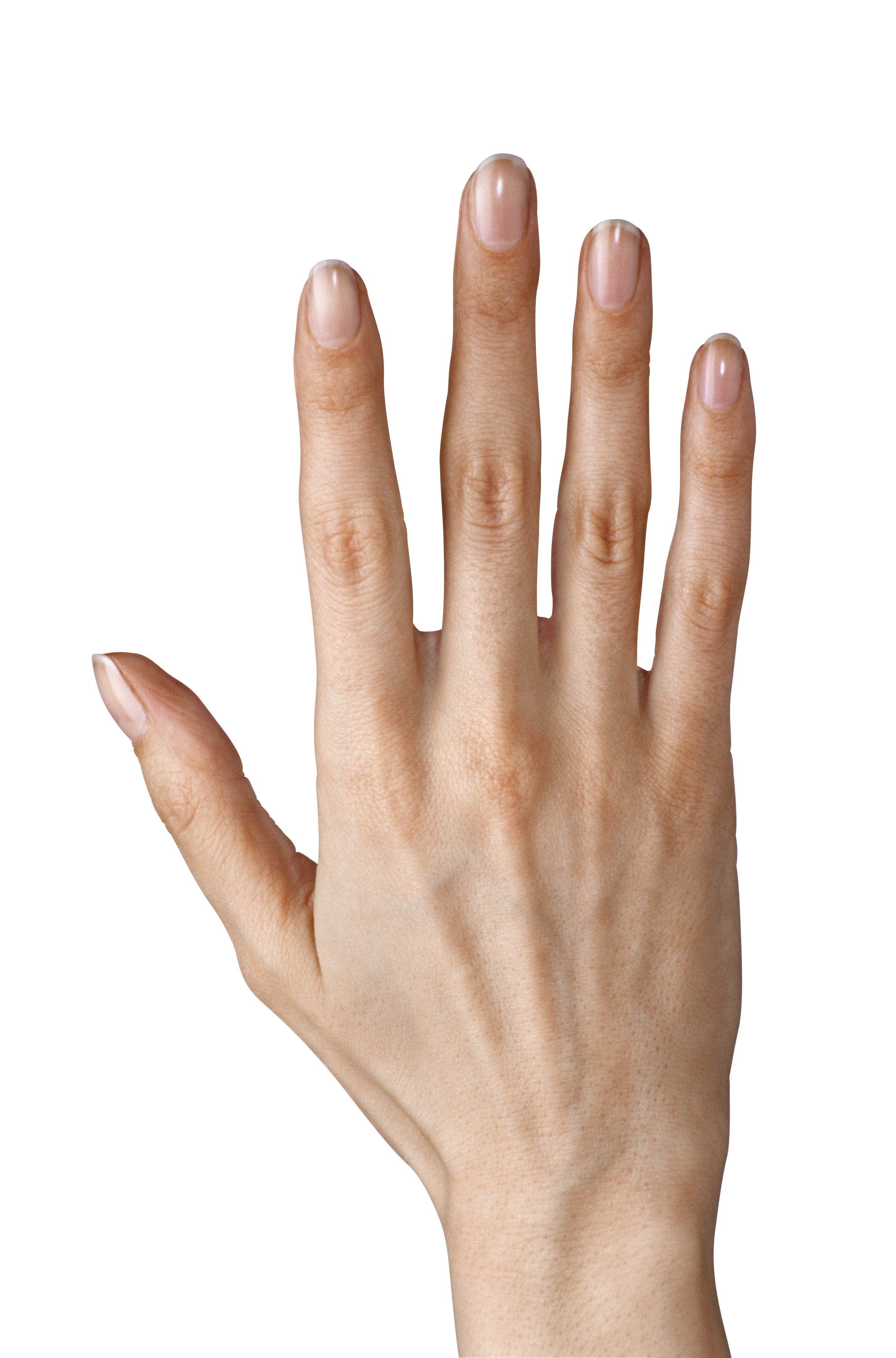 image black and white download Hand showing five png. Fingers clipart