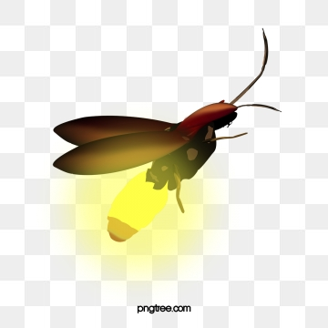 vector free Firefly vector. Png psd and clipart