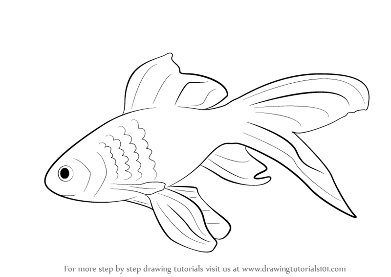 graphic transparent library Fishes drawing. Learn how to draw