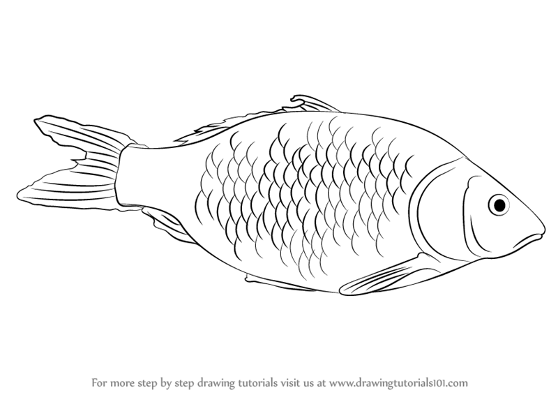 clipart Learn how to draw. Fishes drawing
