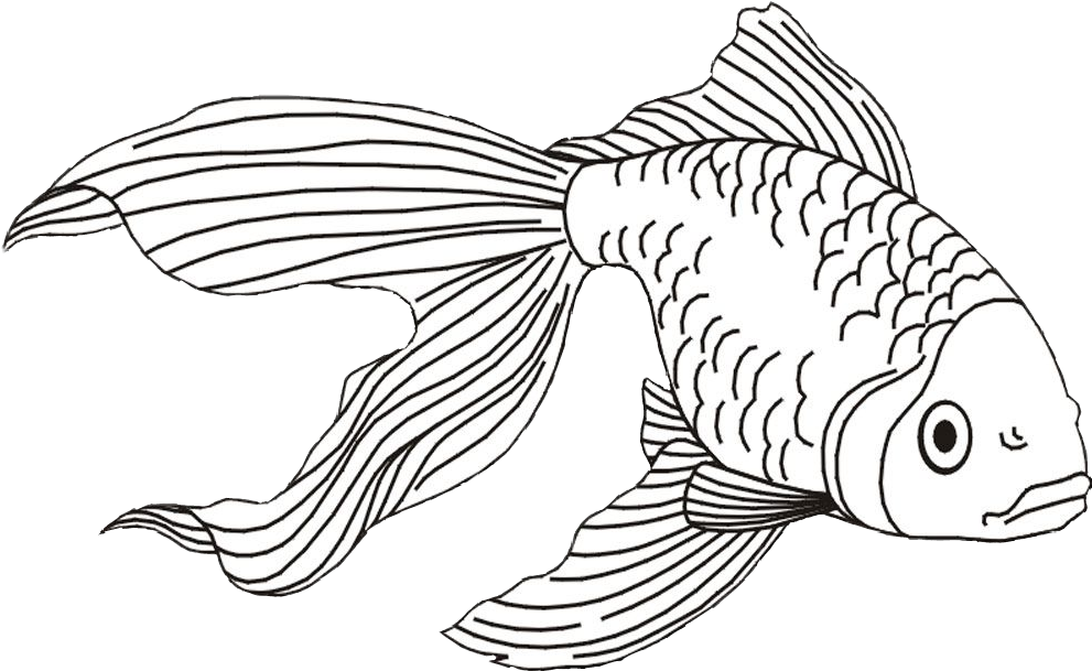 picture black and white stock fish goldfish koifish betta fishes drawing fishdrawing