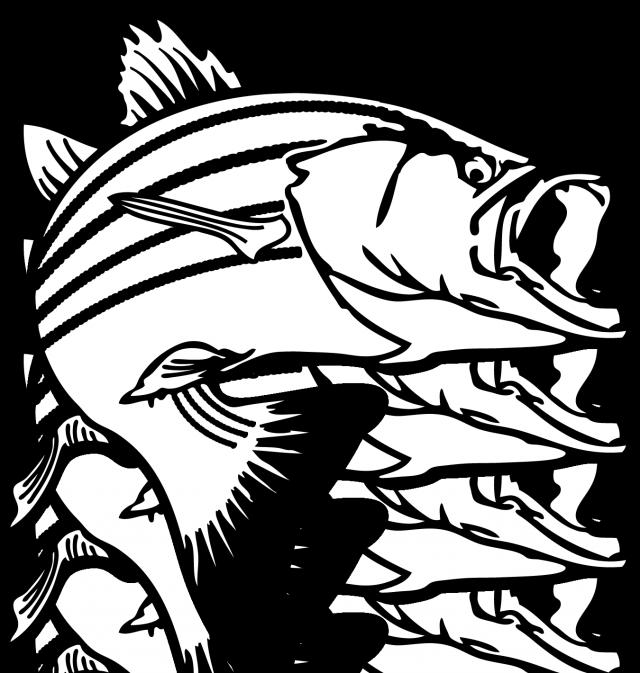 clipart library library tarpon drawing salmon #104556253