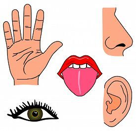 image freeuse library Image result for my. Five senses clipart.