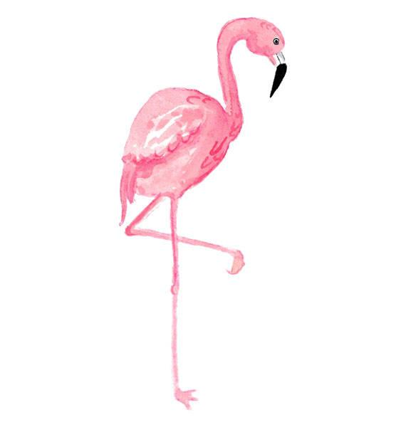 picture royalty free stock Watercolor tropical bird illustration. Flamingo clipart