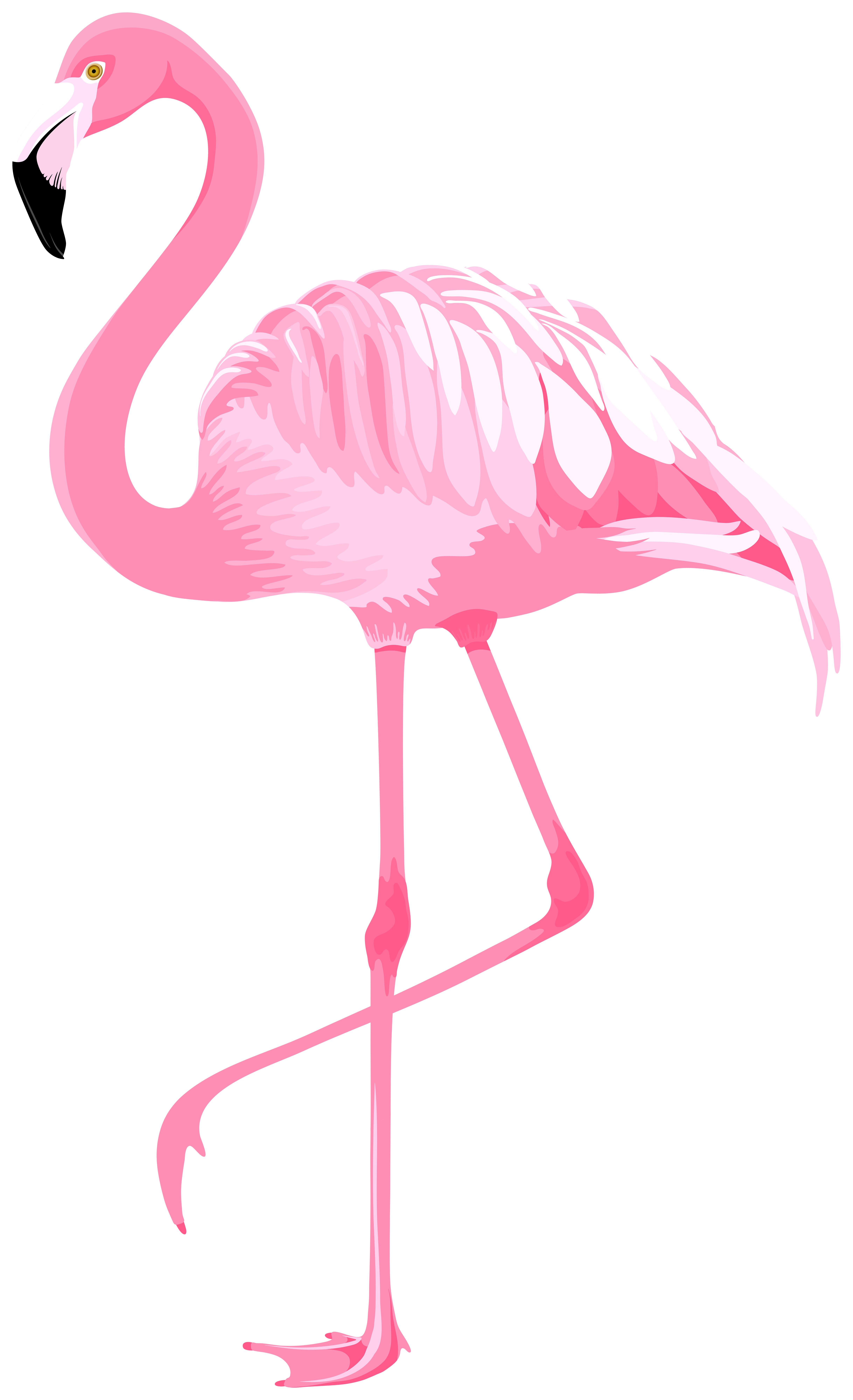 stock Flamingo clipart. Pink png gallery yopriceville.