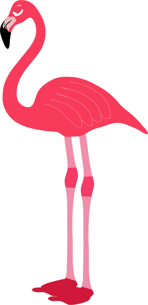 picture library stock flamingo png