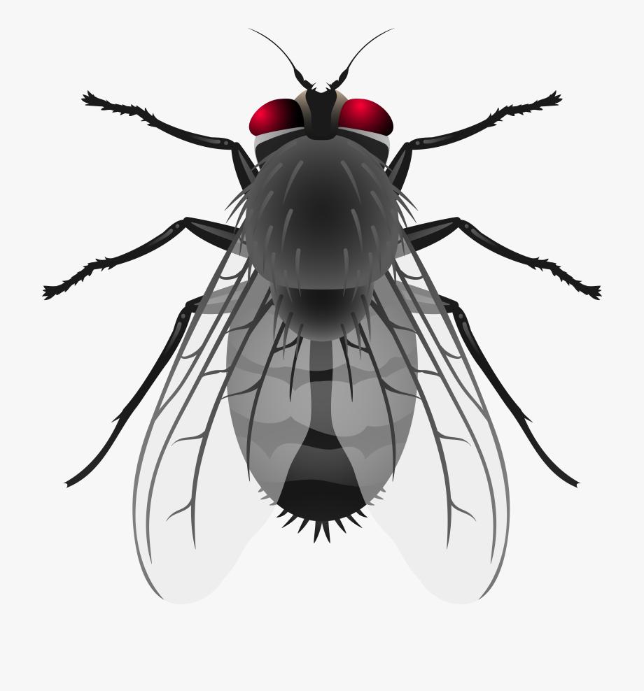 jpg transparent stock Flies clipart. Fly png clip art