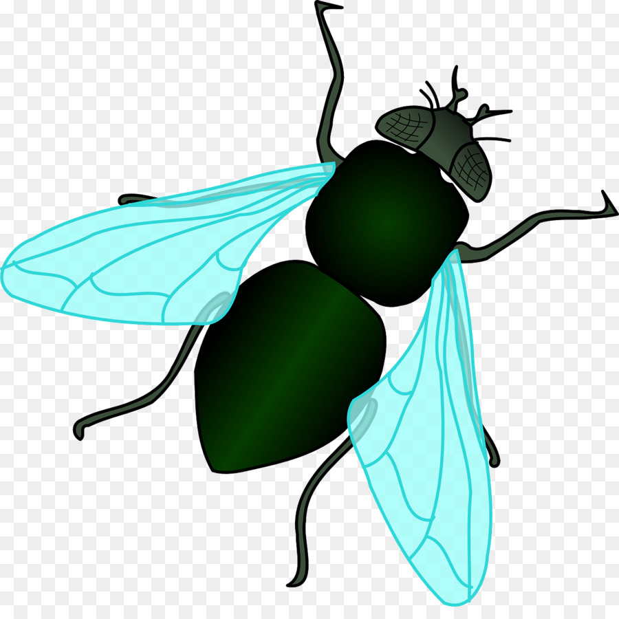 clip black and white download Flies clipart.  clipartlook