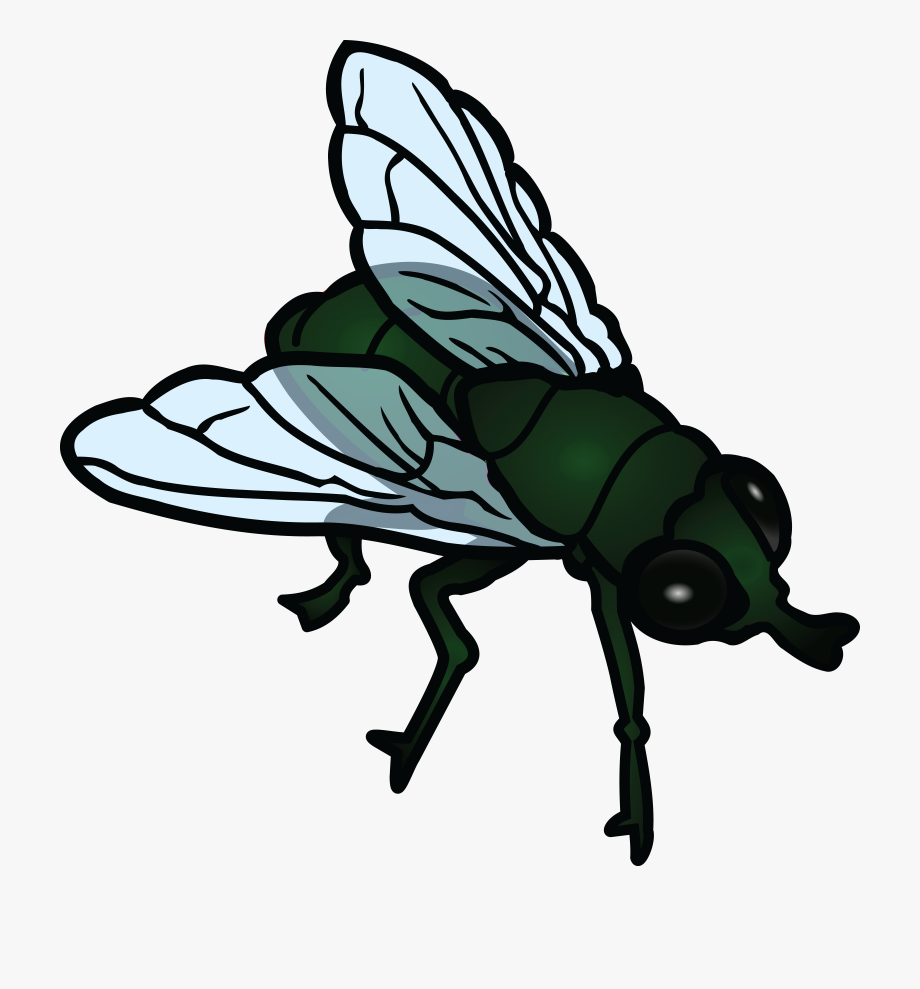 svg freeuse library Flies clipart. Fly transparent cartoon .