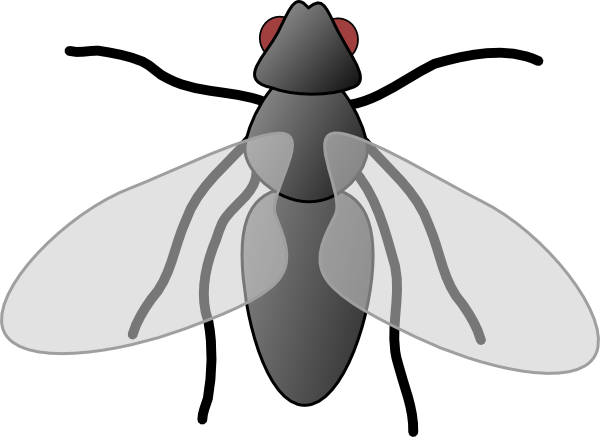 graphic freeuse stock Fly clipart png. Free cliparts download clip.