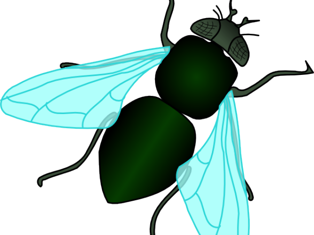 graphic royalty free download Filthy free on dumielauxepices. Flies clipart.