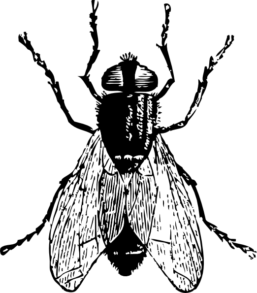 jpg free library Fly Clipart Black And White