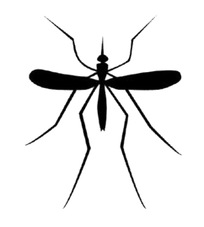 svg royalty free stock Mosquito clipart dead mosquito. Png transparent images all.