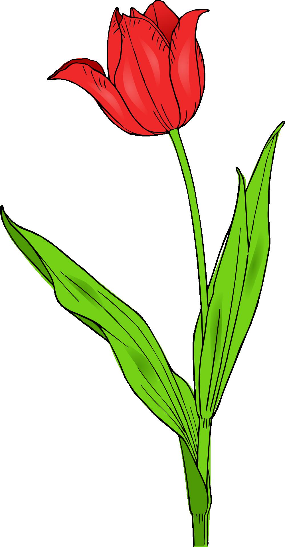 image transparent stock Tulip Spring Flower