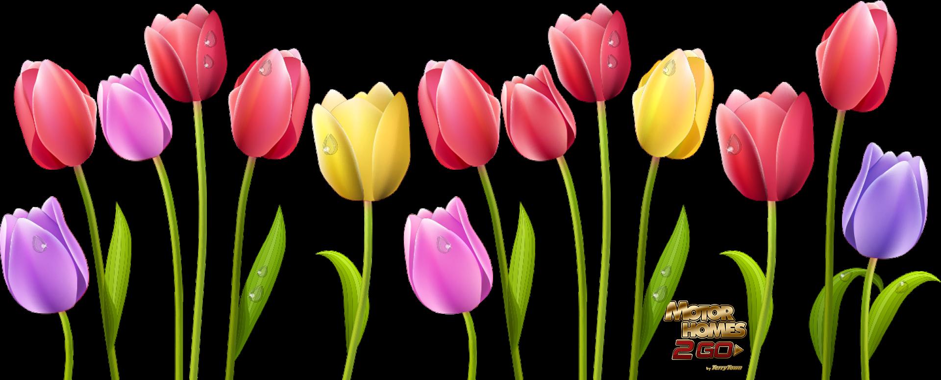 vector royalty free stock Indira Gandhi Memorial Tulip Garden Flower Computer Icons Clip art