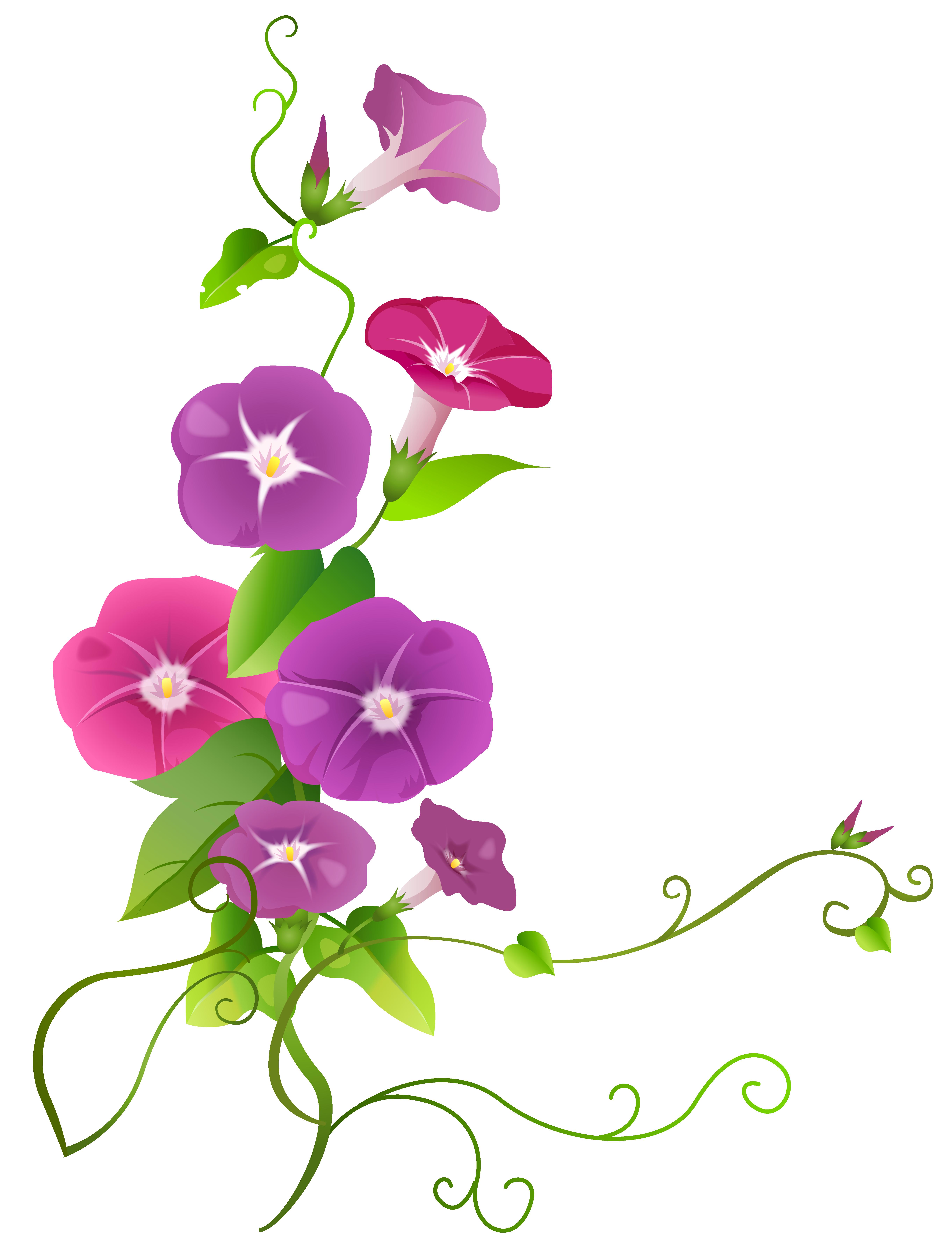 clip transparent stock Clipart flower border. Ipomoea transparent png clip