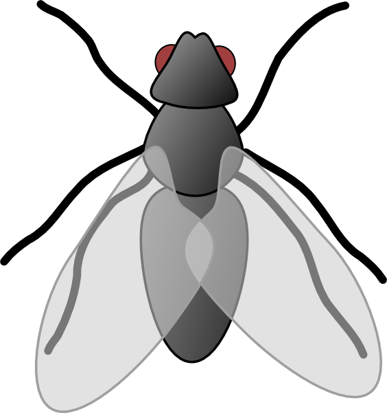 picture black and white Fly clipart. The top best blogs.