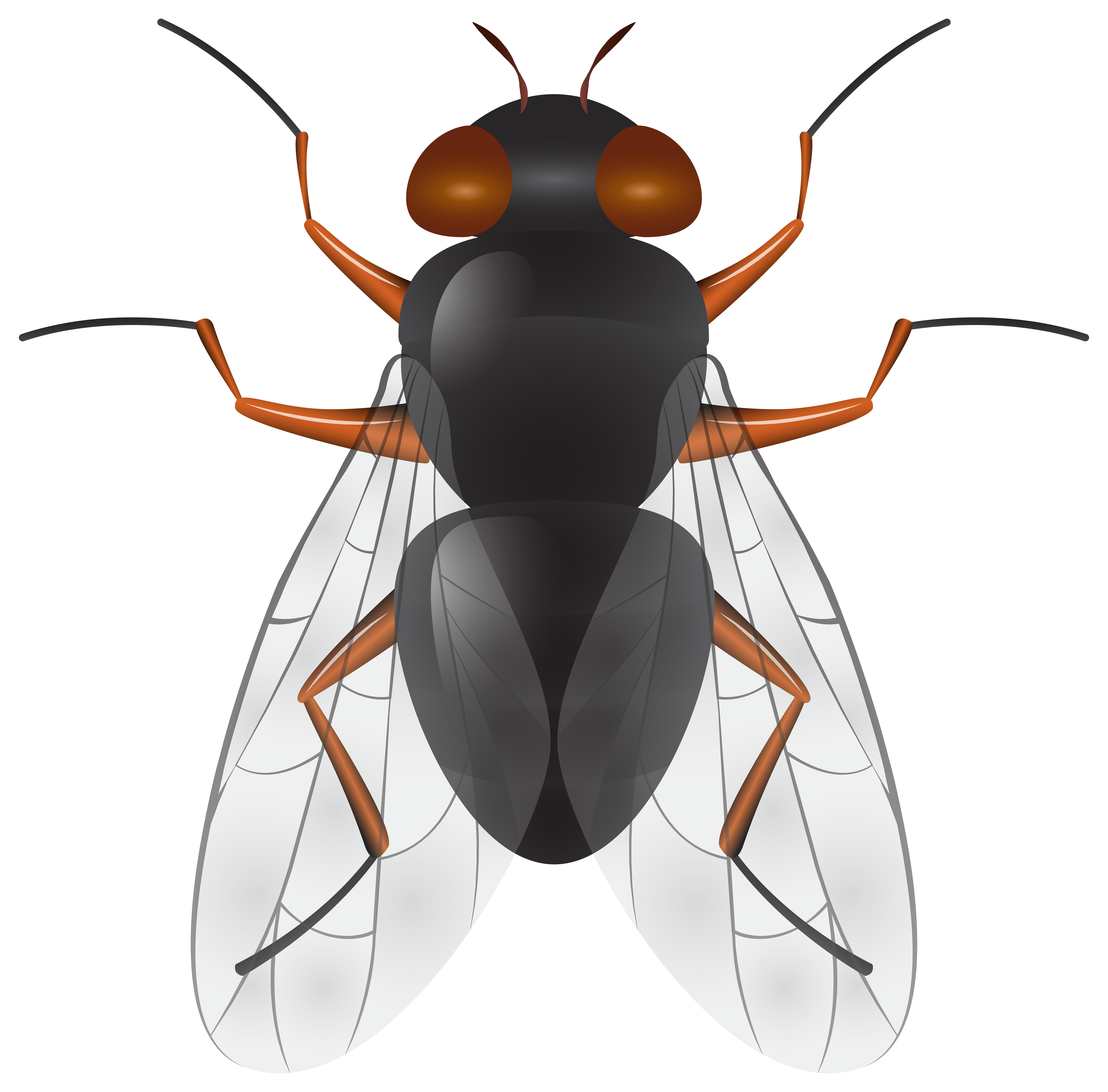 svg library download Png clip art best. Fly clipart.