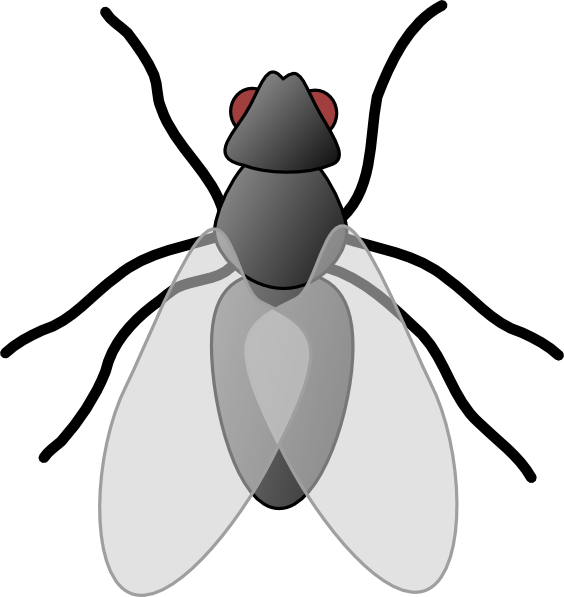 vector royalty free library Fly bug insect clip. Flies clipart.