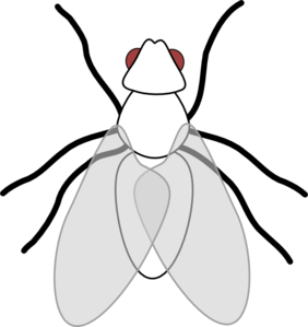 clip freeuse download Collection of free Bleck clipart white fly