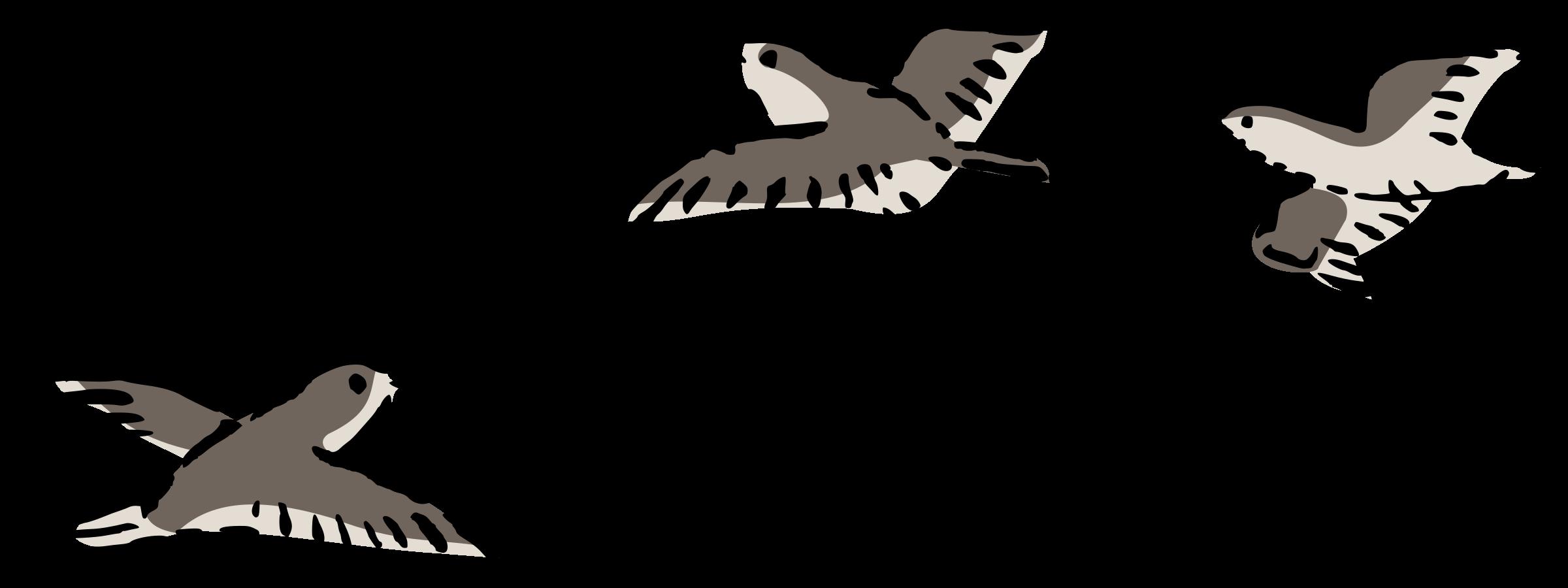 jpg freeuse download Bird flight Columbidae Domestic pigeon Clip art