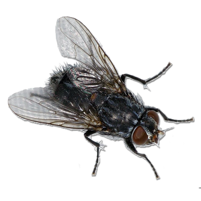 clipart black and white Fly PNG image
