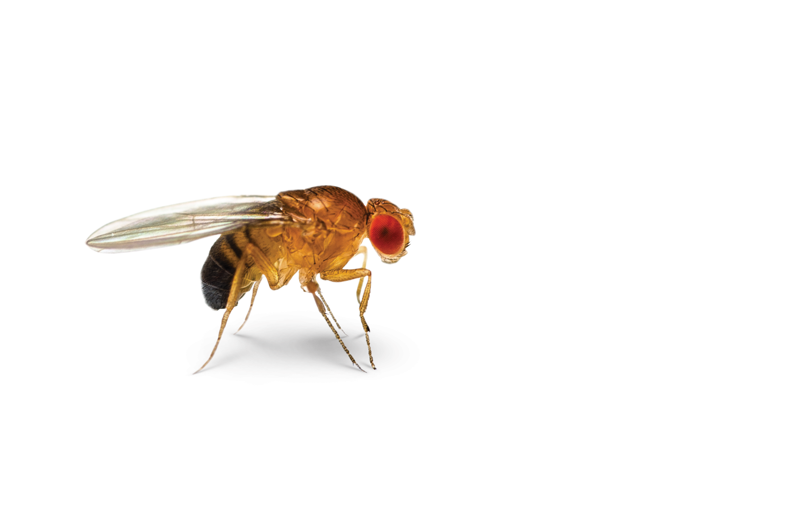svg library library fly transparent fruit #96735051