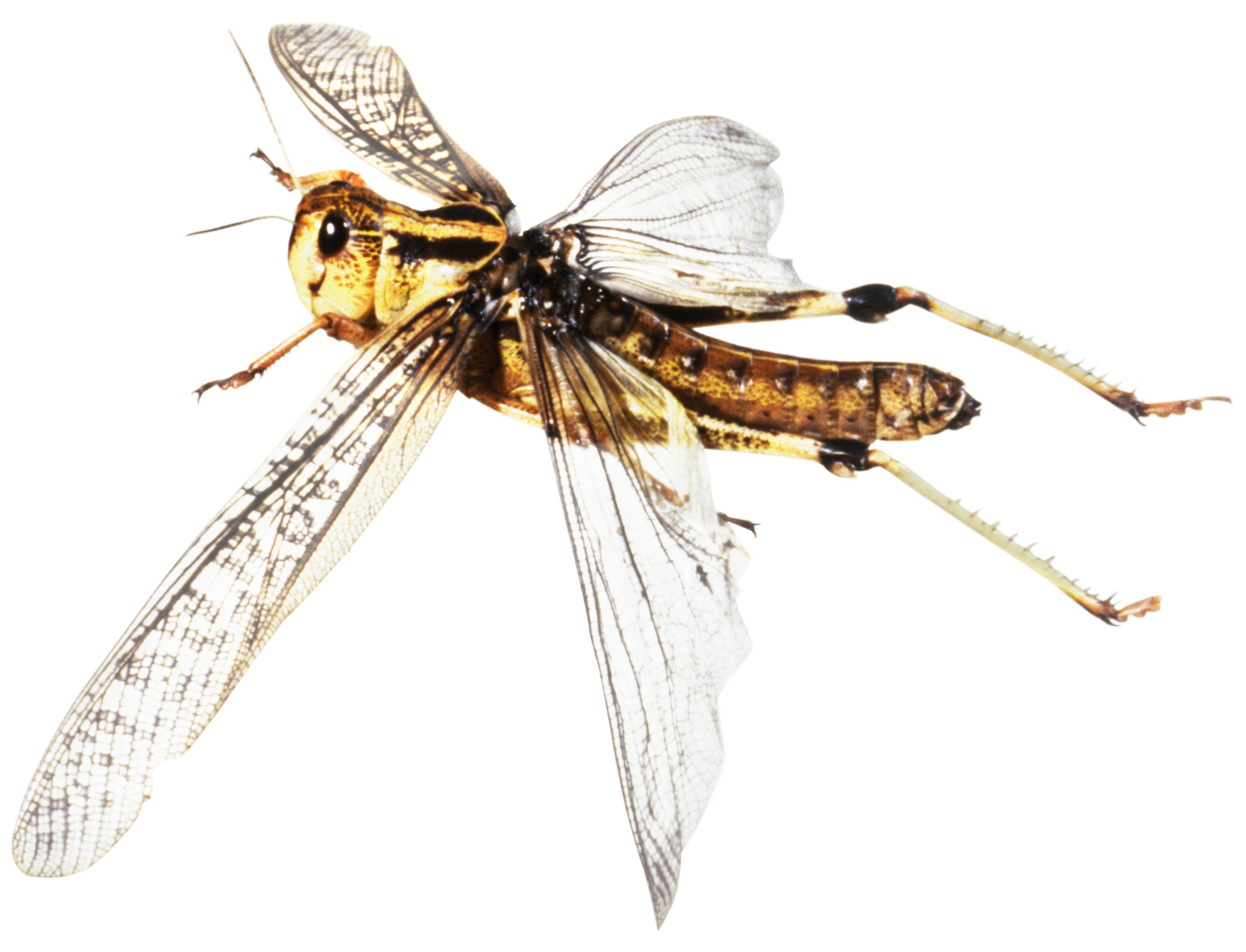 image royalty free download Flying Insects
