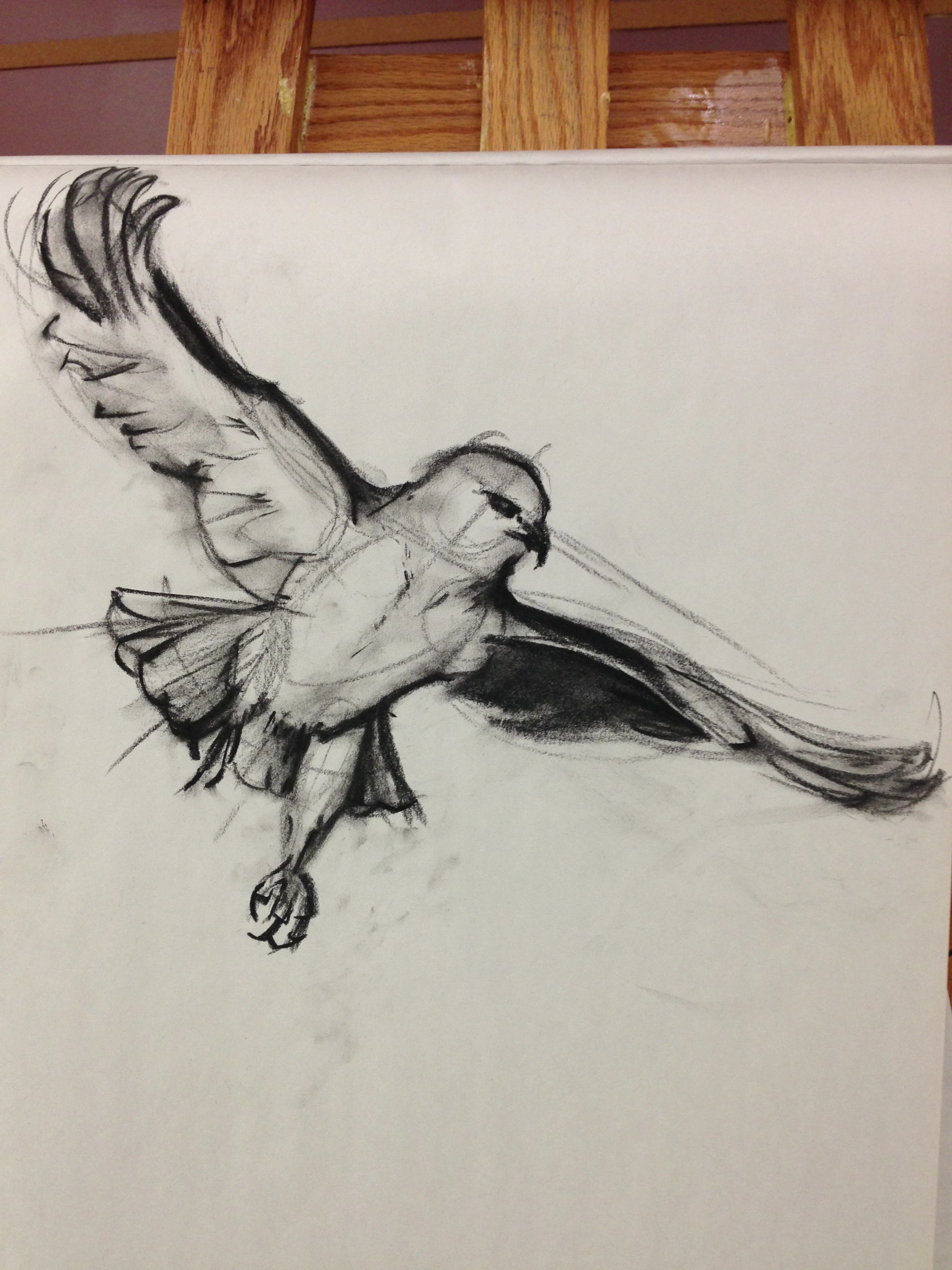 clip library stock Drawing charcoal bird. I love drawings illustrations