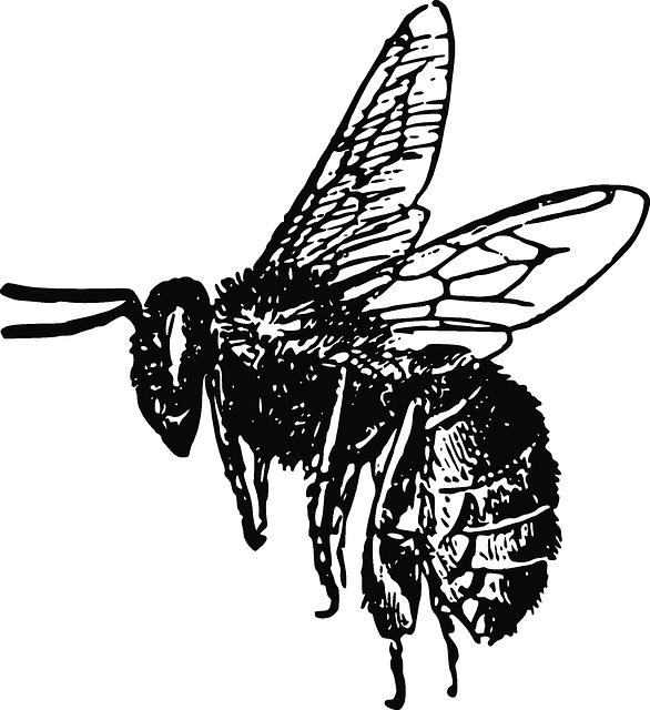 vector free Free Image on Pixabay