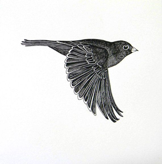 graphic transparent Flying original ink drawings. Typography drawing bird